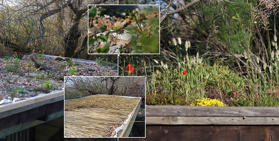 how to build a green roof garden shed