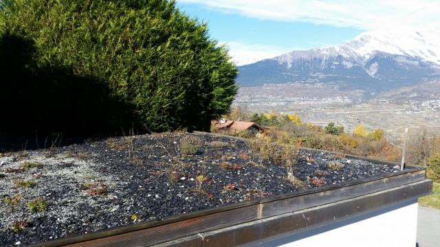 Slate green roof
