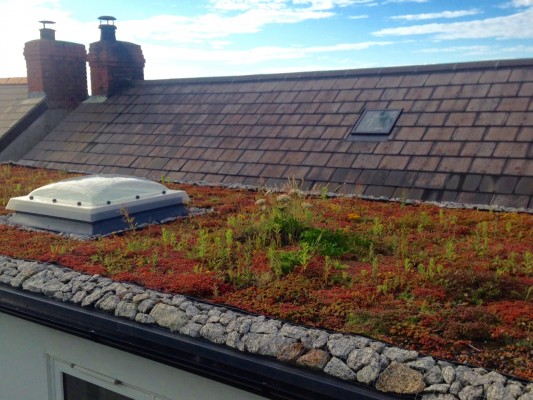 First and last - green roof England