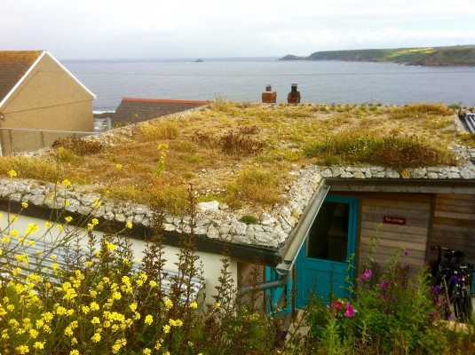 coastal green roof -First and Last