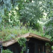 Green roof Shed on Hampstead Heath