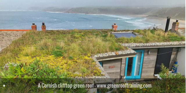 Clifftop green roof - Cornwall