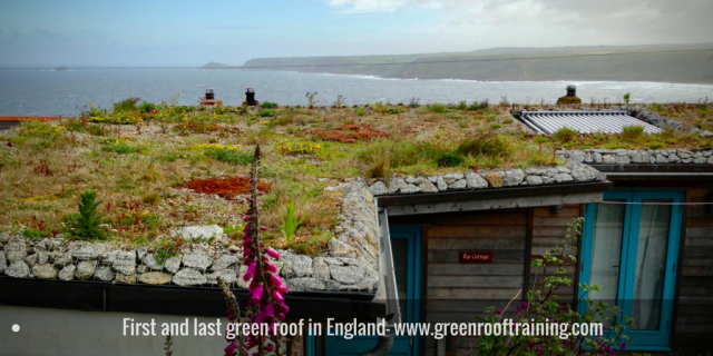 clifftop green roof - first and last