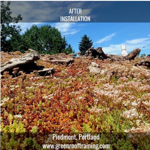 Piedmont green roof