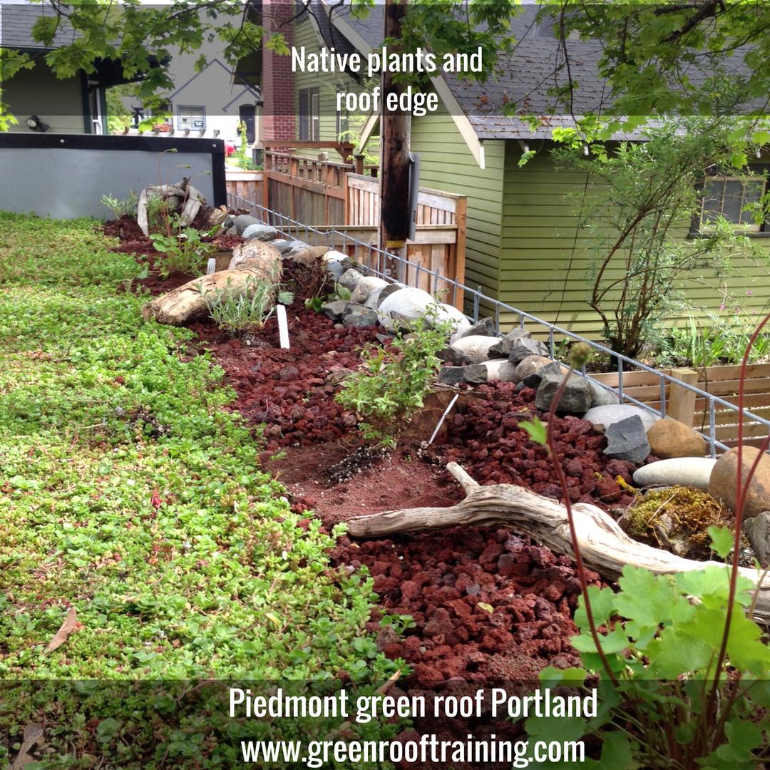 A Piedmont Green Roof In Portland Oregon
