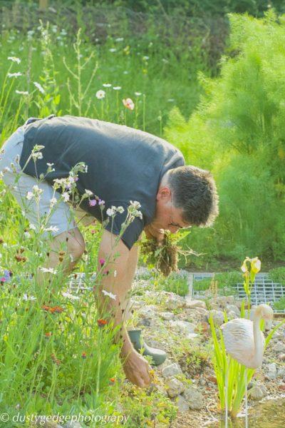 Little - brownfield garden weeding