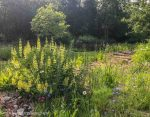 gardens designed for wildlife and people 2