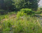 gardens designed for wildlife and people 1
